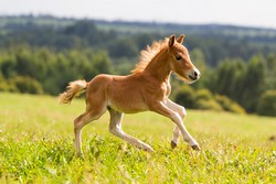 Neugeborene sind bei vielen Pferdeversicherungen bis zu 6 Monaten nach der Geburt beitragsfrei mitversichert.