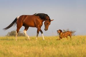 Pferdebesitzer können nicht 24 Stunden am Tag auf Ihre Tiere aufpassen. So kann also nicht immer ein Schadensfall verhindert werden.