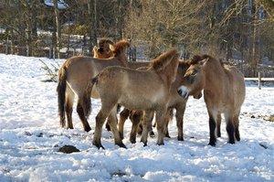 Bei mehreren Pferden gibt es bei mancher Pferdehalterhaftpflicht einen Rabatt auf die Beiträge.