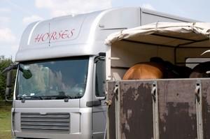 Auf die Absicherung von Schäden an einen Pferdeanhänger sollten Pferdebesitzer ebenfalls denken