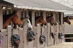 Sachschäden an einer Pferdebox sind ebenfalls in einer guten Pferdehalterhaftpflicht abgesichert.