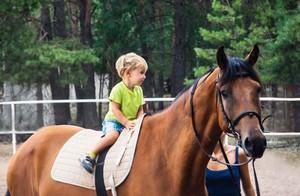 Auch ein Therapiepferd kann im Versicherungsschutz einer Pferdehalterhaftpflicht enthalten sein.
