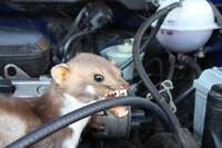 Motorradversicherung Teilkaskoversicherung